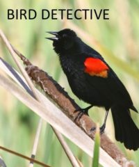 Bird Detective Display