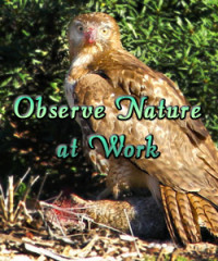 Observe Nature at Work