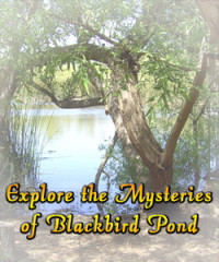 Explore Blackbird Pond