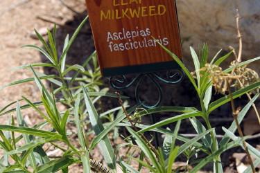 Grow Caterpillars Too!