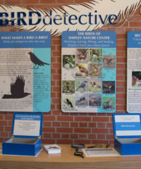 bird-detective-for-website-4