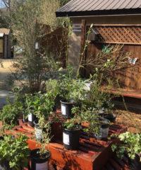 Native Plant Nursery_newsletter