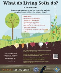 What Do Living Soils Do