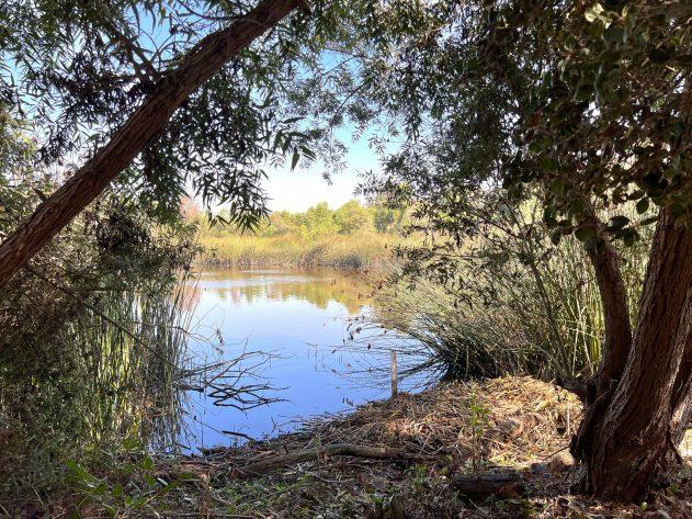 Blackbird Pond View
